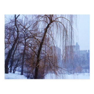 Winter Trees In Central Park Postcard