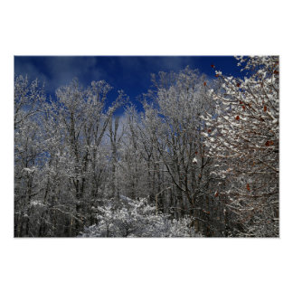 Winter Trees in Greig Park 2 Poster