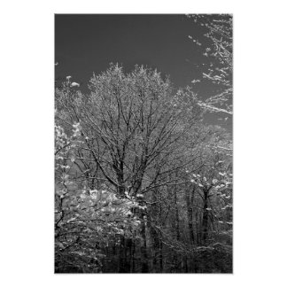Winter Trees in Greig Park BW Poster