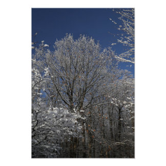 Winter Trees in Greig Park Poster
