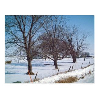 Winter Trees on a Farm in Iowa Postcard