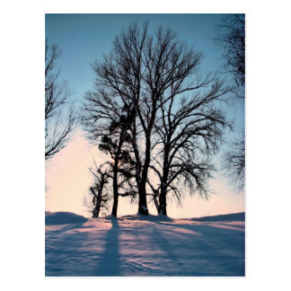 Winter trees on  blue sky background post card