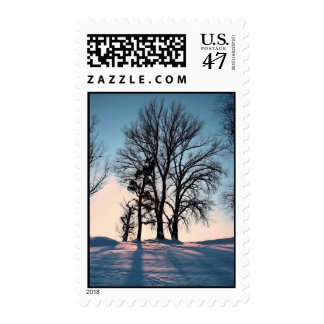 Winter trees on blue sky background postage