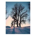 Winter trees on  blue sky background postcard