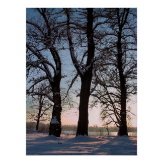 Winter trees on twilight blue sky background print