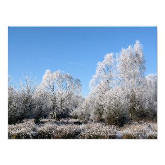 WINTER TREES PHOTO PRINT