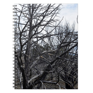 Winter Trees Photograph Notebook