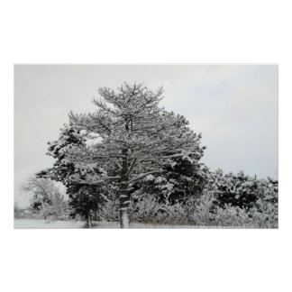 Winter Trees & Plants all covered with snow. III 6 Poster