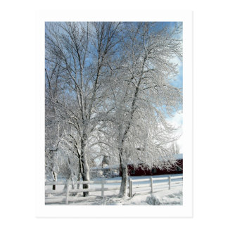 Winter trees postcard