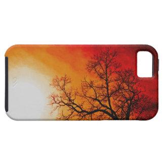 Winter Trees & Setting Sun Nature Scene Pastural iPhone 5 Cases