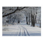 Winter Walking Trail Postcard