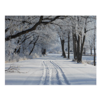 Winter Walking Trail Postcard