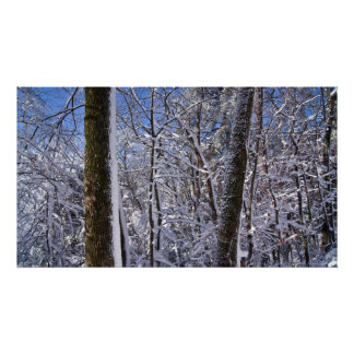 Winter Wall Ice and Snow Trees Poster