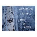 Winter Weeping Birch Wedding Postcards