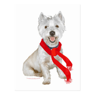 Winter Westie in a Red Scarf Postcard
