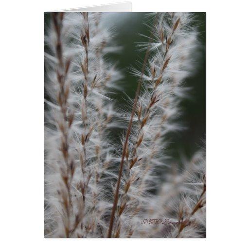 Winter Wheat Card