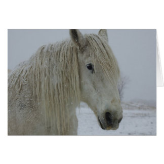 Winter White Card