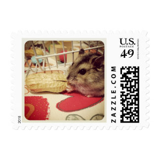 Winter White Hamster Eating a Peanut Postage Stamp