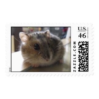 Winter White Hamster postage stamp