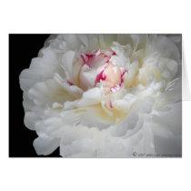 winter-white shiver card