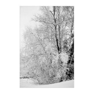 Winter Whites Acrylic Wall Art