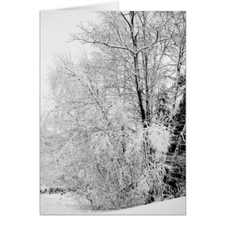 Winter Whites Card
