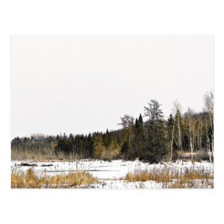 Winter Wilderness Postcard