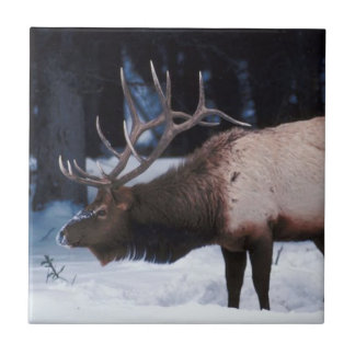 Winter Wildlife With Antlers In The Snow Ceramic Tile