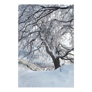Winter Willow Photograph