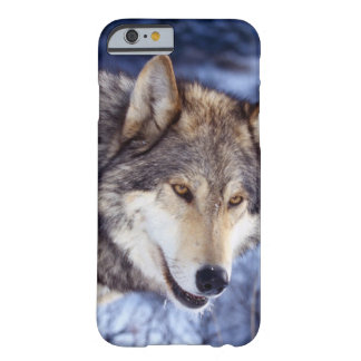 Winter Wolf 2 Barely There iPhone 6 Case