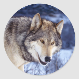 Winter Wolf 2 Classic Round Sticker