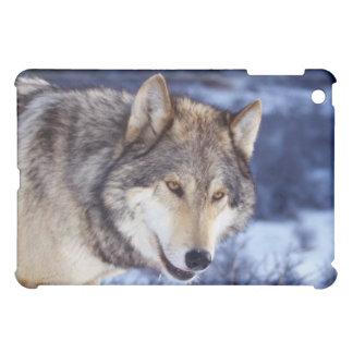 Winter Wolf 2 iPad Mini Cover