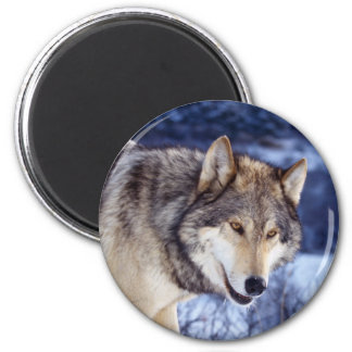 Winter Wolf 2 Magnet