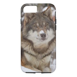 Winter Wolf iPhone 7 Case