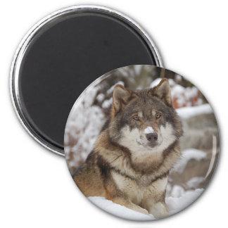 Winter Wolf Magnet