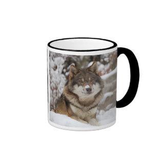 Winter Wolf Mugs