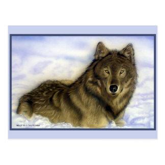 Winter Wolf Postcard