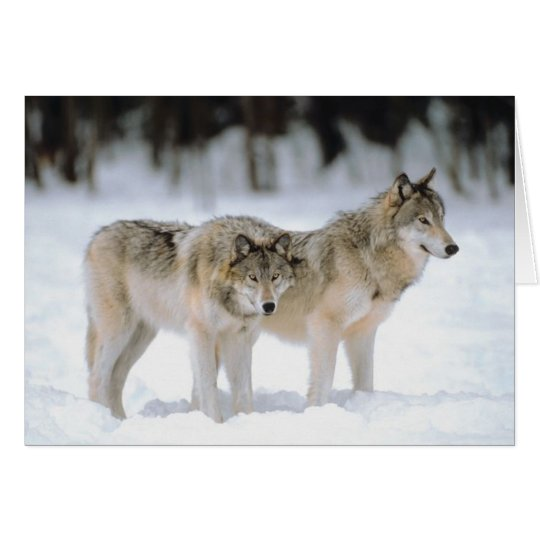 Winter Wolves Snow Xmas Holiday Christmas Blank Card