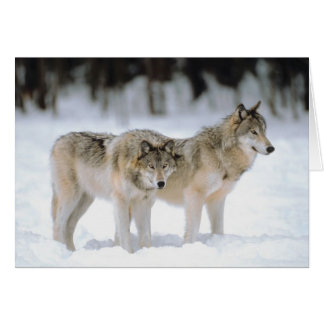 Winter Wolves Snown Xmas Holiday Christmas Blank Card