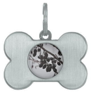 Winter wonder country pet tag