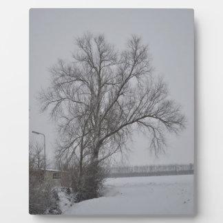 Winter wonder country plaque