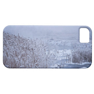 Winter Wonder Wetlands Photo iPhone SE/5/5s Case