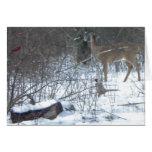 Winter Wonderland Greeting Cards