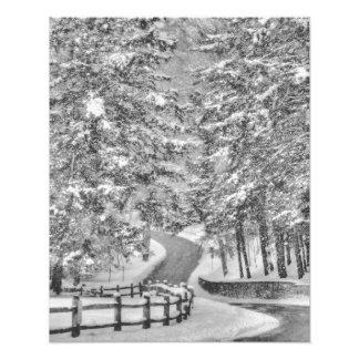 Winter Wonderland Photo Enlargement