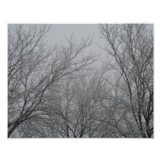 Winter Wonderland Photo Print