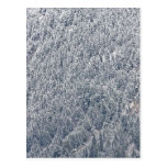 Winter Wonderland Post Card