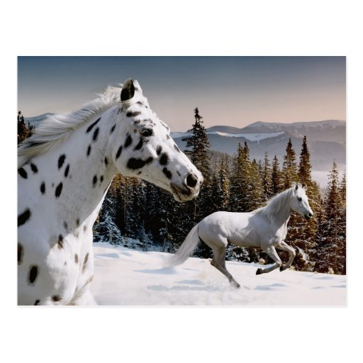 Winter Wonderland Post Cards