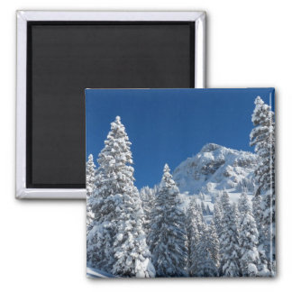 Winter Wonderland Snow Covered Trees Mountains Magnets