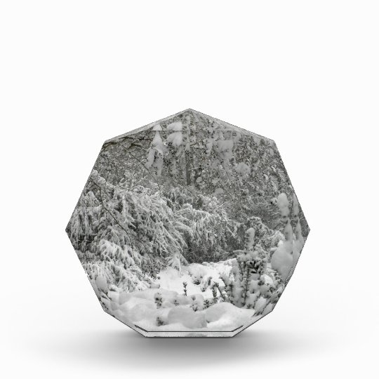 Winter Wonderland Woods in the Snow Photo Acrylic Award
