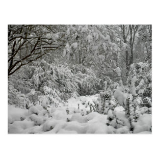Winter Wonderland Woods in the Snow Photo Post Cards